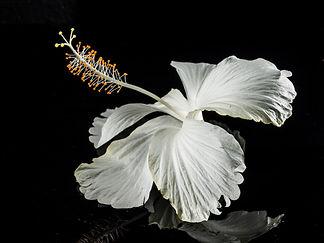 bloom-blossom-flora-64210.jpg