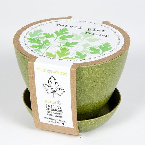 Minipot persil plat - Mano Verde