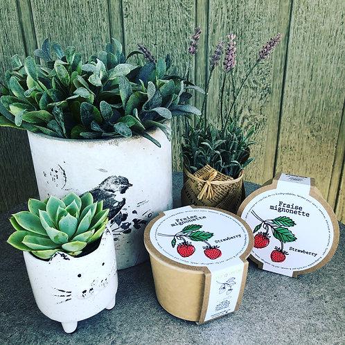 Minipot fraise mignonette - Mano Verde