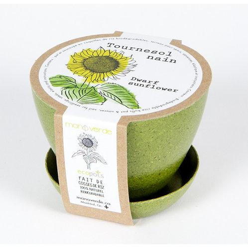 Minipot tournesol nain - Mano Verde