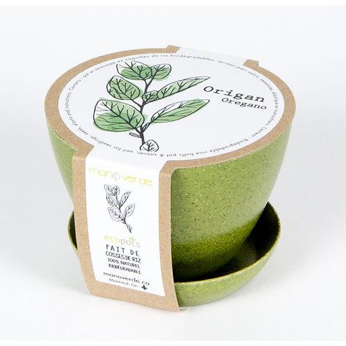 Minipot Origan grec - Mano Verde