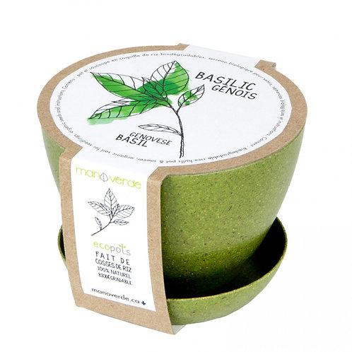Minipot Basilic - Mano Verde