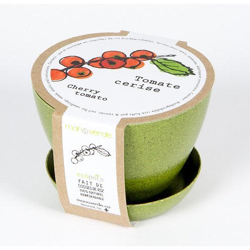 Minipot tomate cerise - Mano Verde