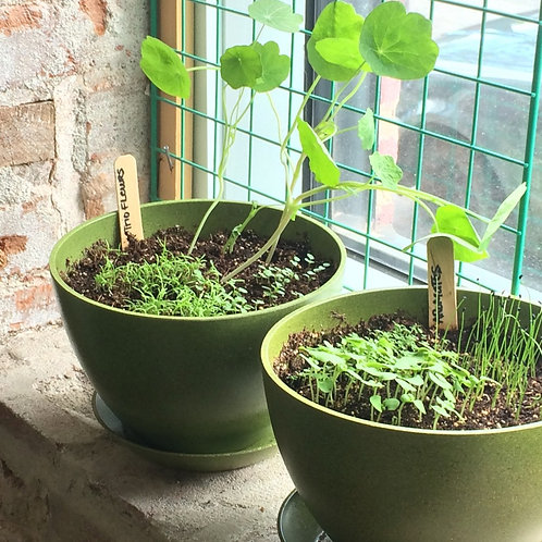 Pot & Soucoupe biodégradable 7 po - Mano Verde