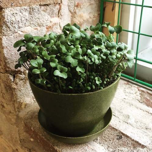 Pot & Soucoupe biodégradable 4 po - Mano Verde