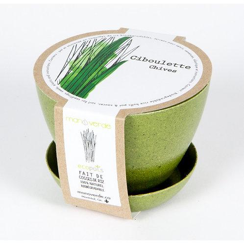 Minipot Ciboulette - Mano Verde