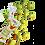 Thumbnail: Amandes enrobées de Matcha / LYNQ