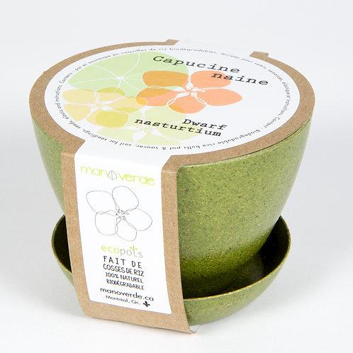 Minipot Capucine naine - Mano Verde