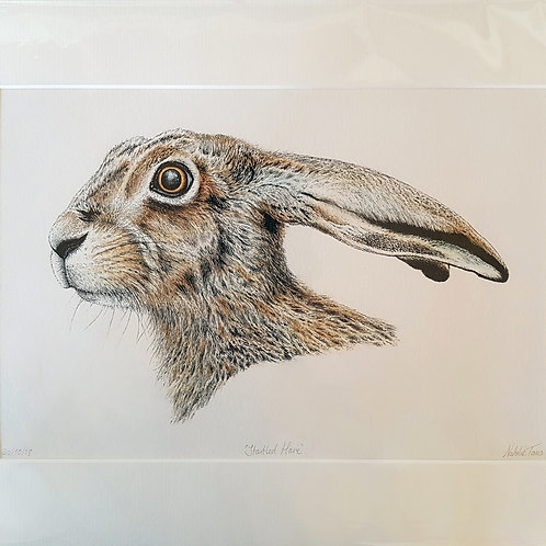 'Startled Hare' mounted Giclée print