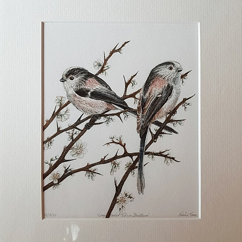 Long-tailed Tits in Blackthorn' mounted Giclée print