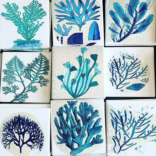 Humble Cottage Seaweed Coaster