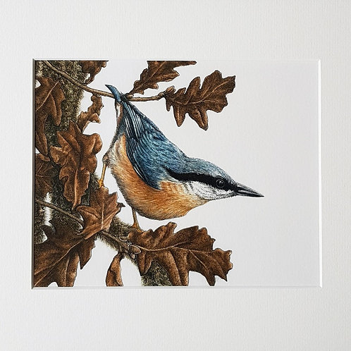 'Nuthatch and Oak' mounted Giclée print