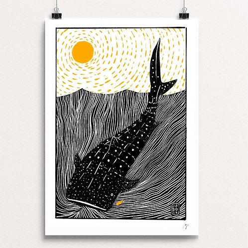 Whale Shark A3 Print by Jago Silver