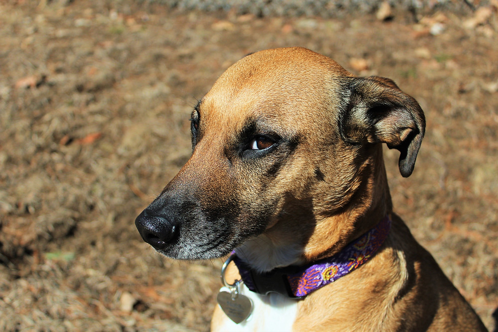Understanding Your Dog's Body Language & The Subtle Cues They Give | Pet Waggin' Pet Care in Long Beach City