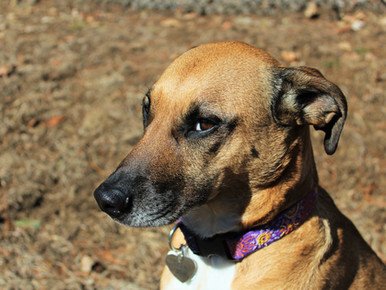 It's hot out – are your dogs doing okay?