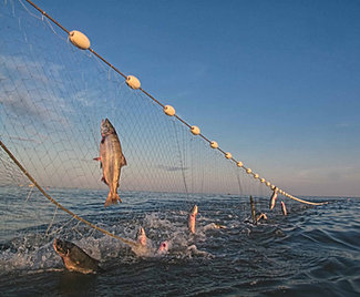Pict fishing nets gill nets for sale fully rigged for Fish nets for sale