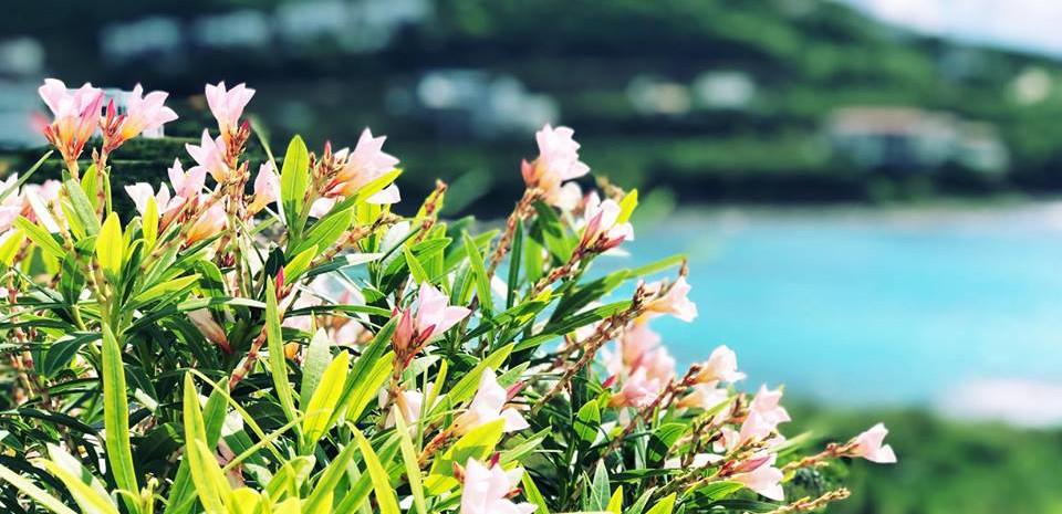 The beauty of Indigo Bay, St. Maarten