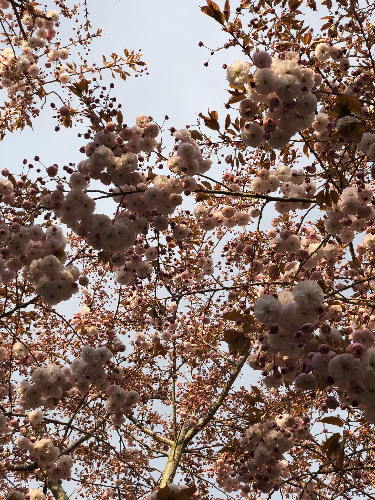 © Au Presbytère de Saigneville - sakura