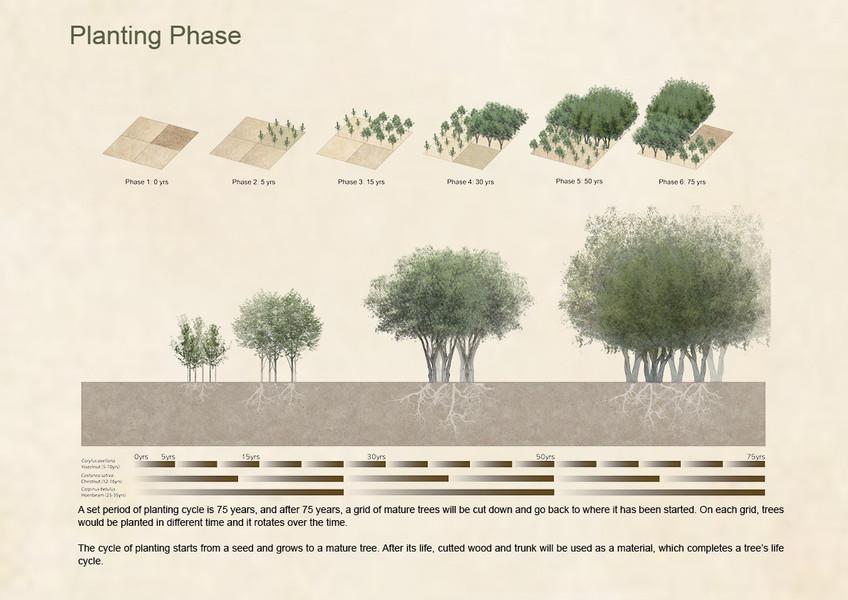 Planting Phase