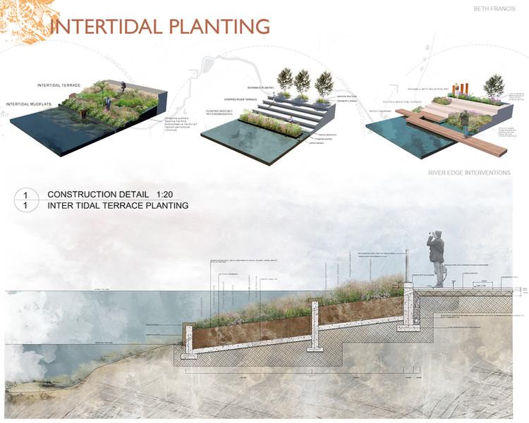 Intertidal Planting