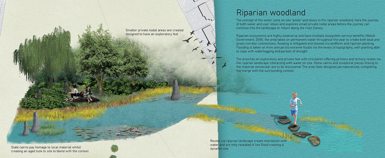 Riparian woodland