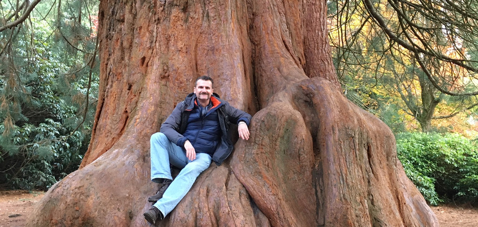 Steve Terry Sheffield Park Giant Redwood