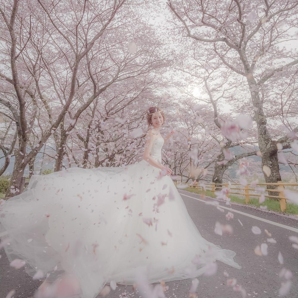 2016年撮影 桜ロケーション撮影から