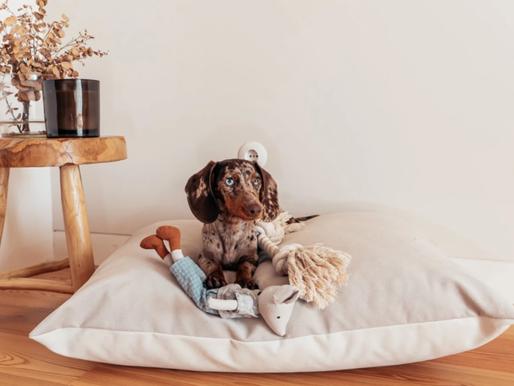Estes adoráveis almofadões e teepees para cães e gatos vão dar um novo ar à sua casa
