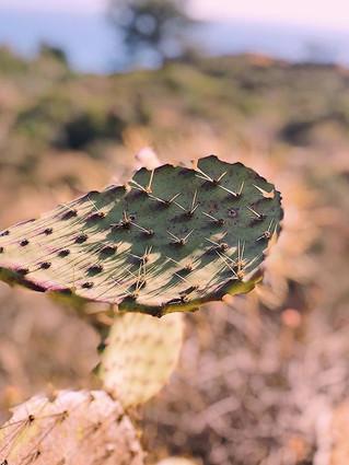 cali cacti capture_._.jpg