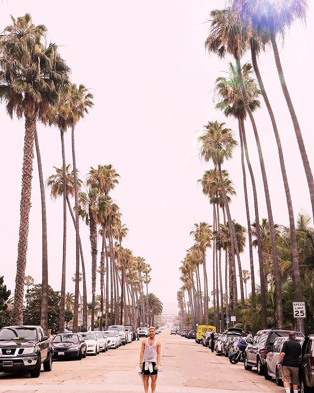 Palm trees and an ocean breeze