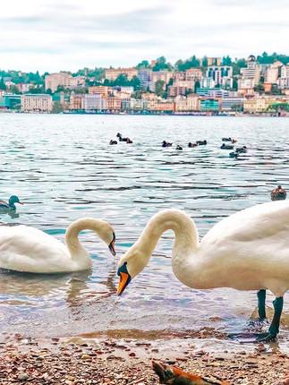 Love birds. ._.jpg