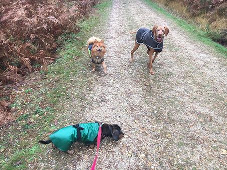 Hatz, Archie and Evie in coats.JPG