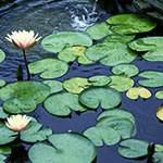 pond38_small.jpg