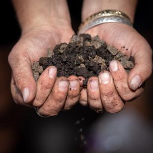 Fertilized Soil