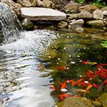 pond8_small.jpg