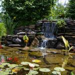 pond9_small(2).jpg
