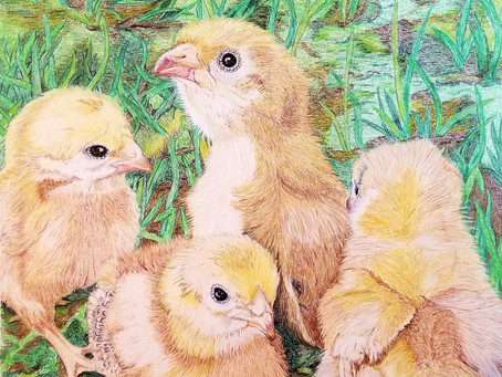 'Chicks in the Grass'