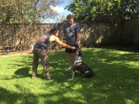 Dog Training Tips For A Happy Dog Home