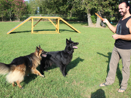 Useful Advice For Training Your Dog Correctly