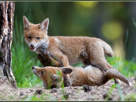Sinnloses Töten unter dem Deckmantel des Artenschutzes