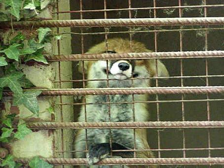 Schliefenfüchse: Gefangenschaft in Angst statt Leben in Freiheit
