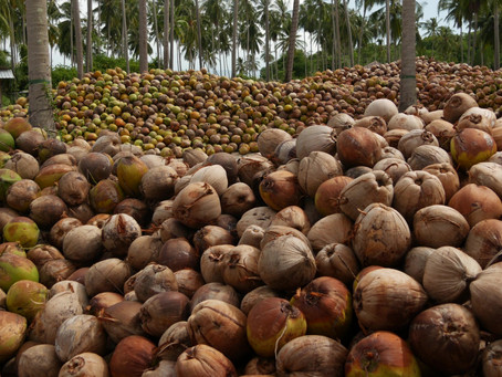 Coconut Bowls: Sustaining the Earth and Enriching our Lives