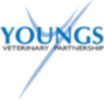 Youngs Vets, About Us, Vet, Peterborough
