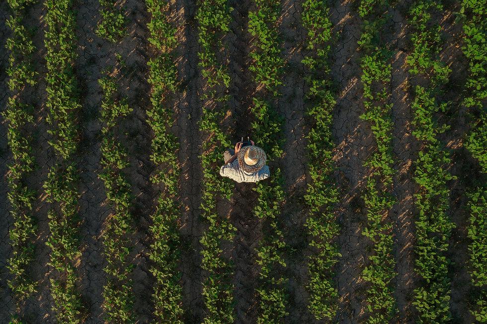 Farmer flying drone across fields