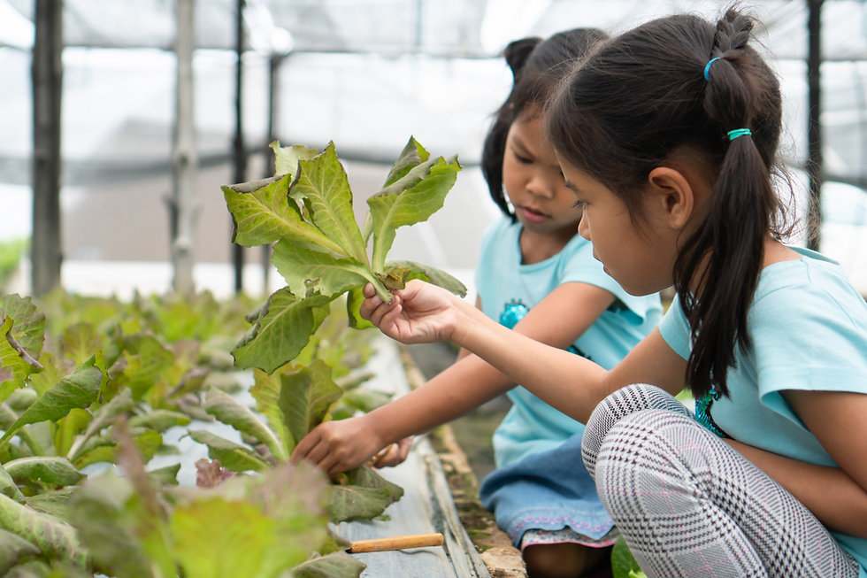 Two children looking at lettuce in a city hydroponic farm