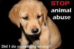animal abuse.jpg