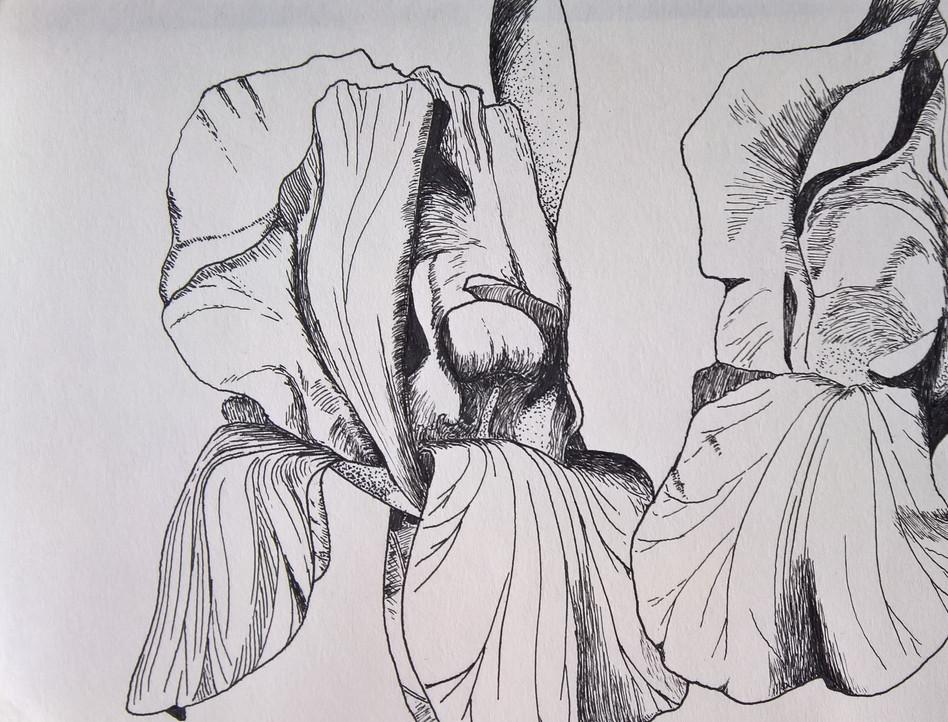 Irises, ink on moleskine paper