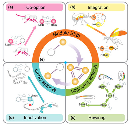 The invariant nature of a morphological character and character state: insights from gene regulatory