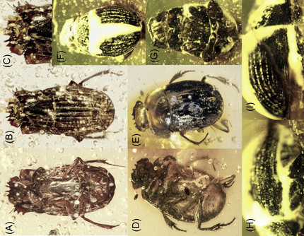 New paper on dung beetle fossils