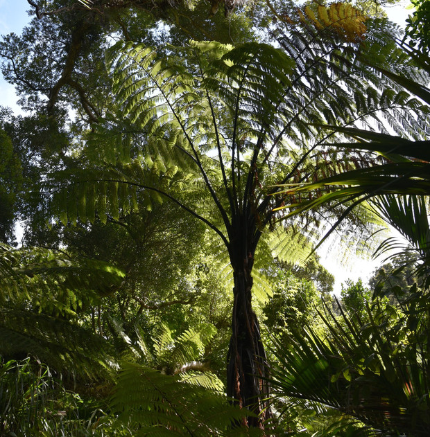 The natural beauty of the Heaphy track